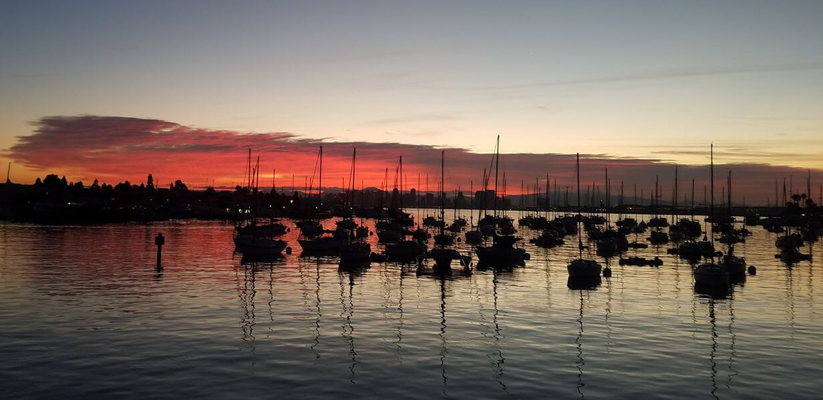 New lo an for Point loma fish counts