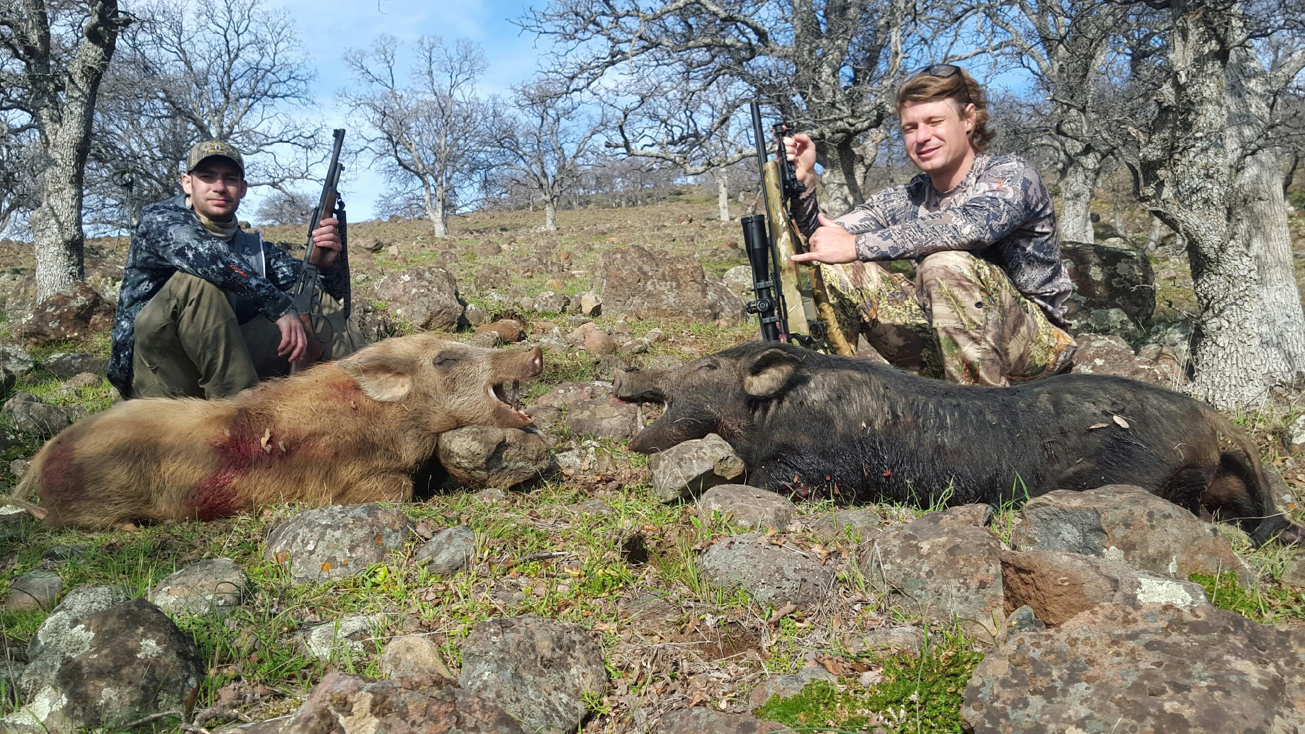 Couple nice boars