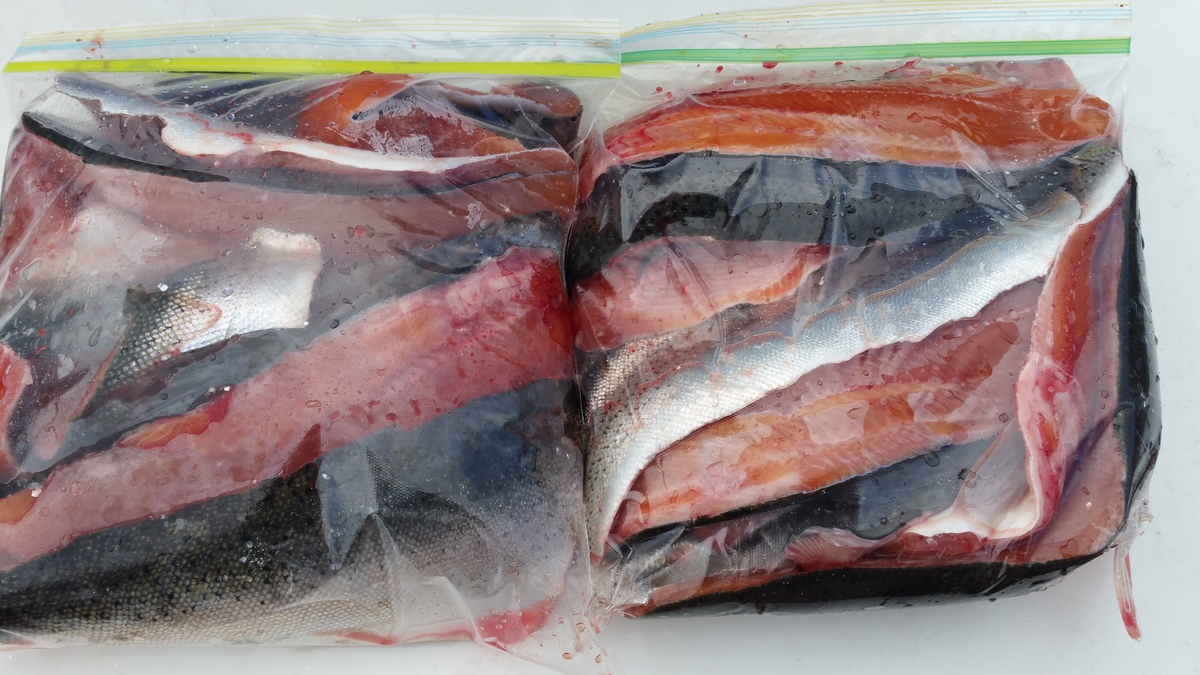 All your fish will be fillet and wrapped for your travel