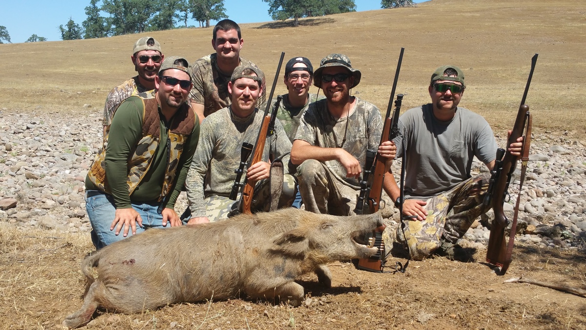 Pig hunting in California