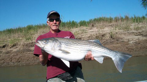 Rob  with a Trophy 34 pound striped bass in colusa