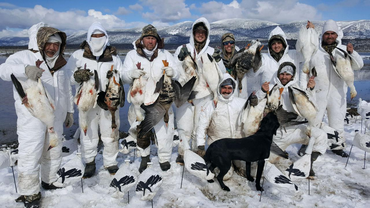 Snow goose hunting late season